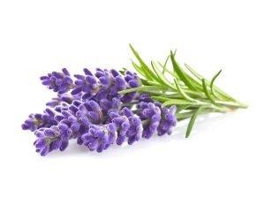 Lavendel gegen ischiasschmerzen